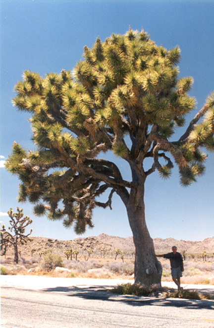 Tony Paterson at Joshua Tree National Park. Photo: Tony Paterson
