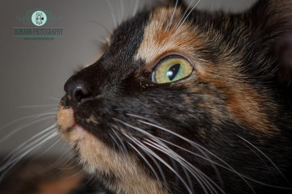 cat photo2