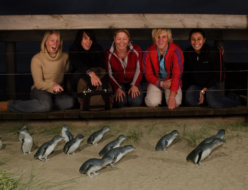 Phillip Island Penguin Parade group.jpg