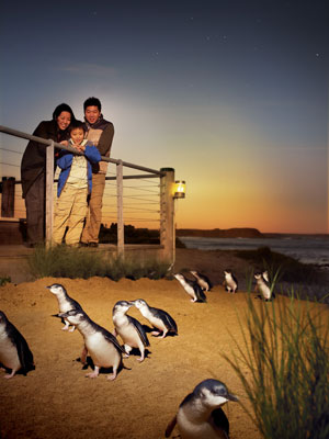 Phillip Island Penguin Parade beach.jpg