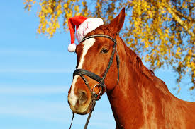 Neigh you have a wonderful Christmas