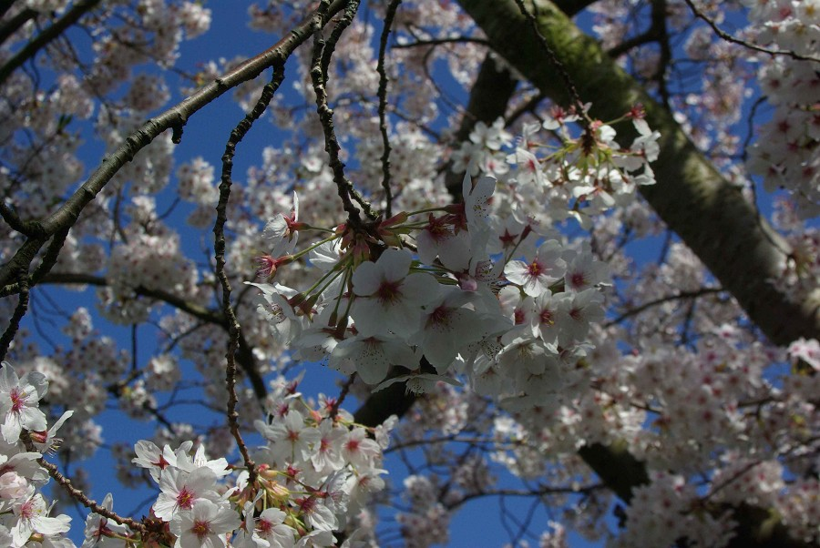 Blossom #1
