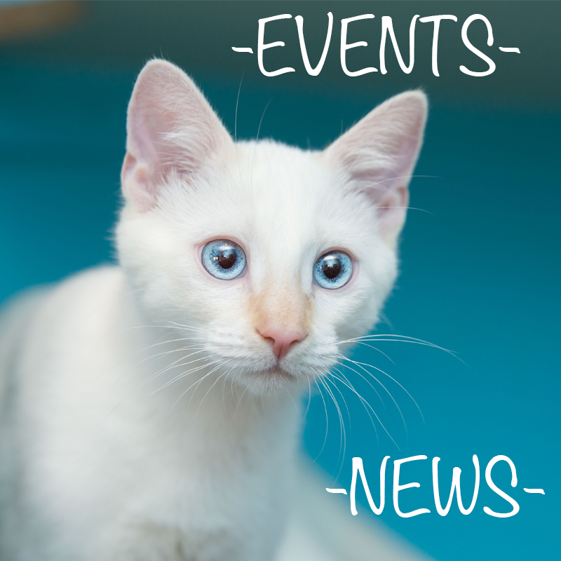 events cats fearless kitty cat rescue.jpg