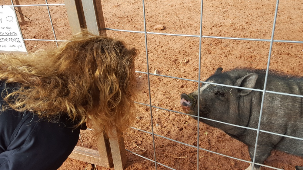 Piggy telling stories.jpg