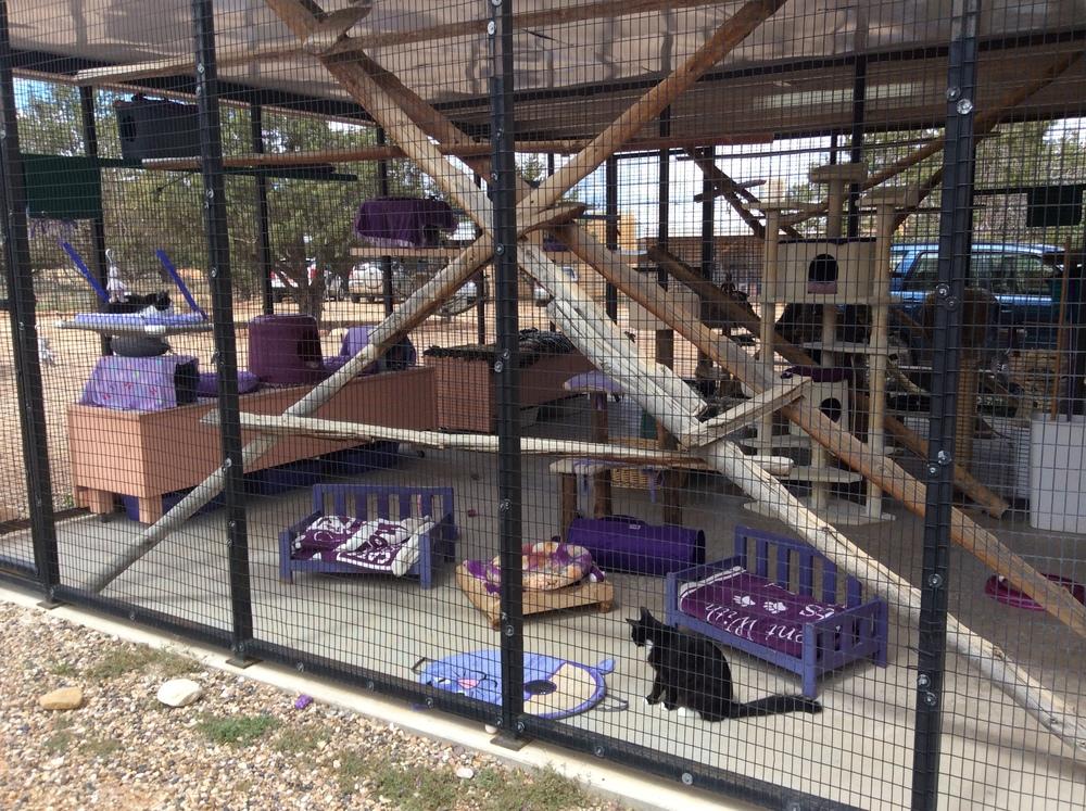 Purple cat room.jpg