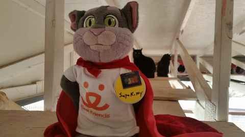SK Rafter Kitties.jpeg