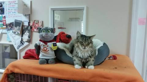 SK Kitty.jpeg