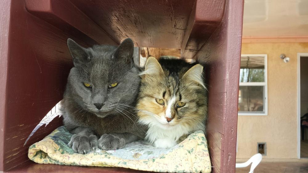 Beautiful Kitties.jpeg