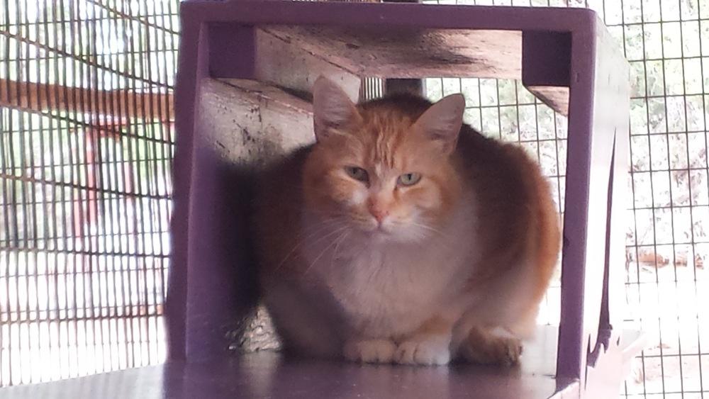 Big Cat.jpg