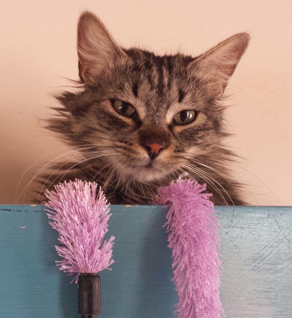 Cat Toy.jpg