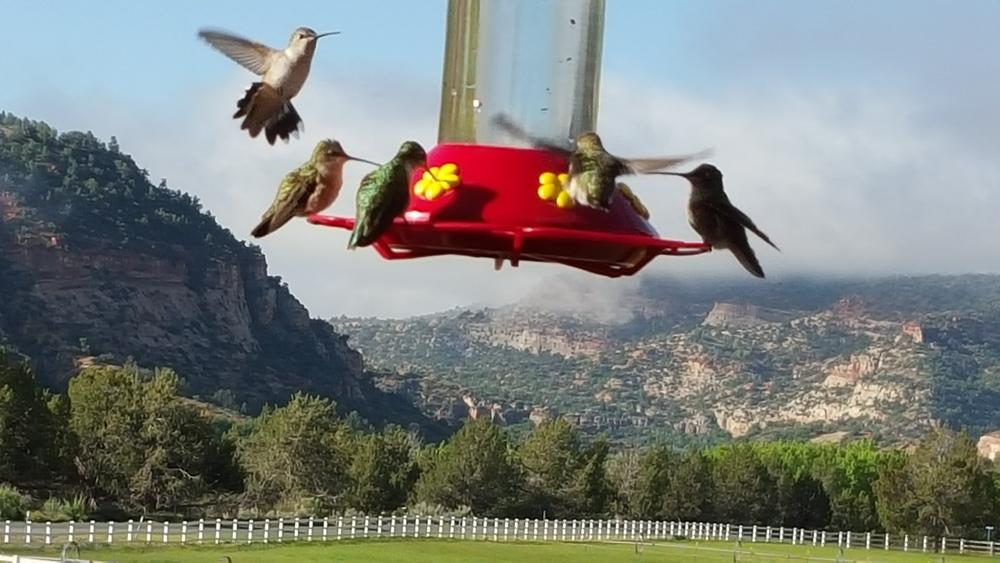 Hummingbirds enjoying life.jpg