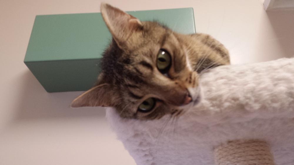 Kitty Sven.jpg