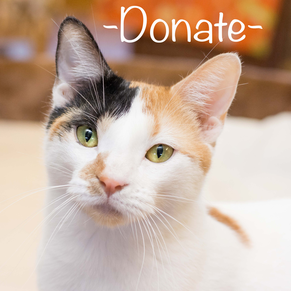 donate shop cats fearless kitty rescue.jpg