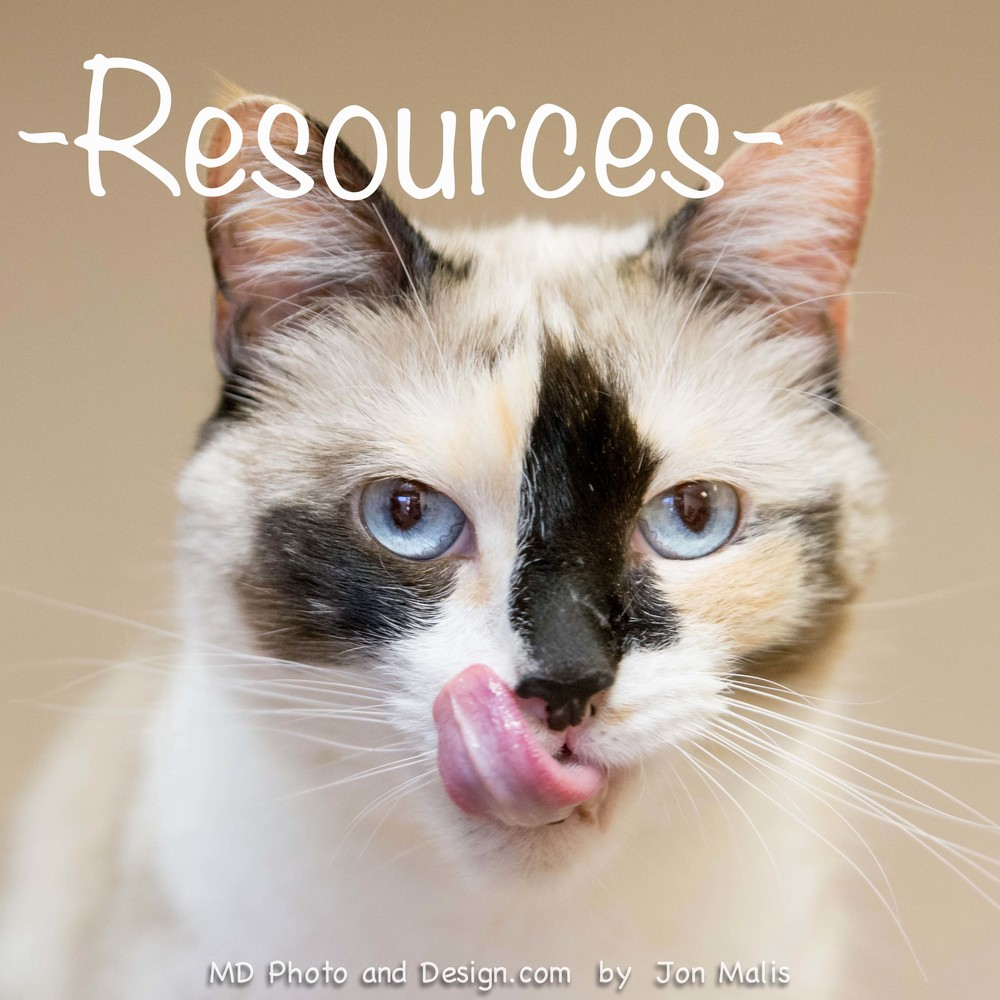 resources cats fearless kitty rescue.jpg