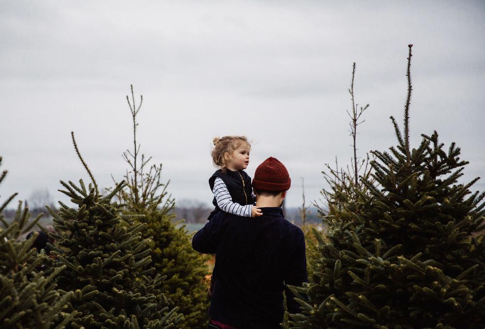 festive holiday christmas tree farm