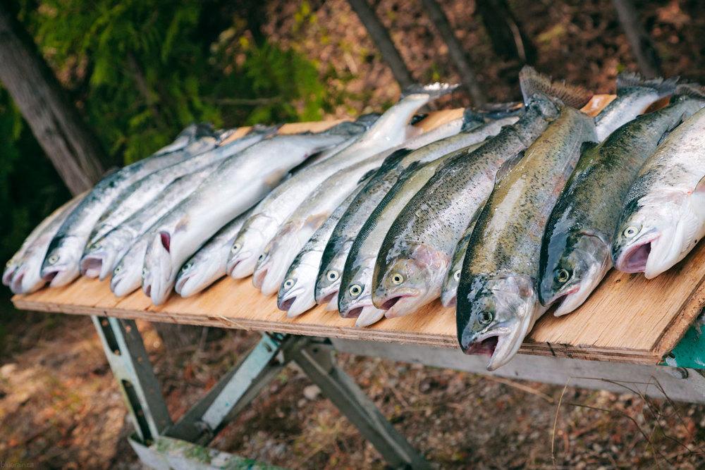 manitoulin-island-ontario-canada-fish