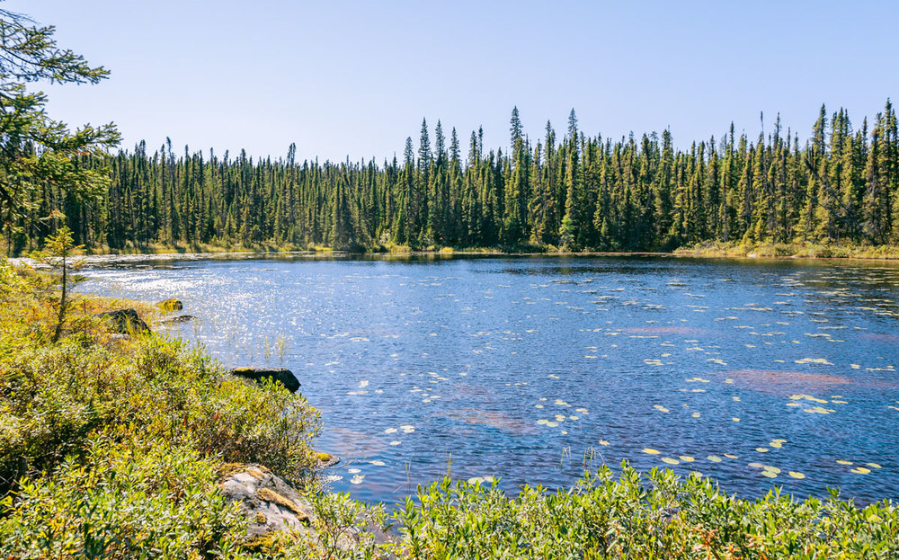 pond-churchill-falls-labrador-trees