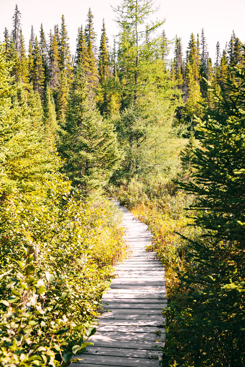 hike-path-trees-churchill-falls-labrador-canada