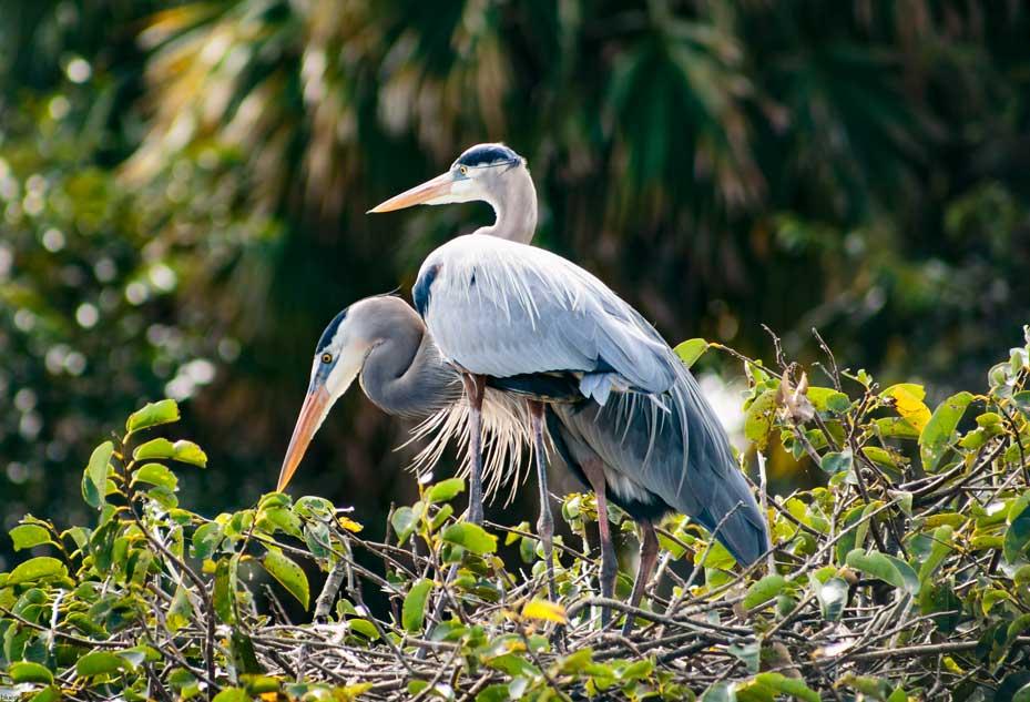 Florida_20171124_0040ae.jpg