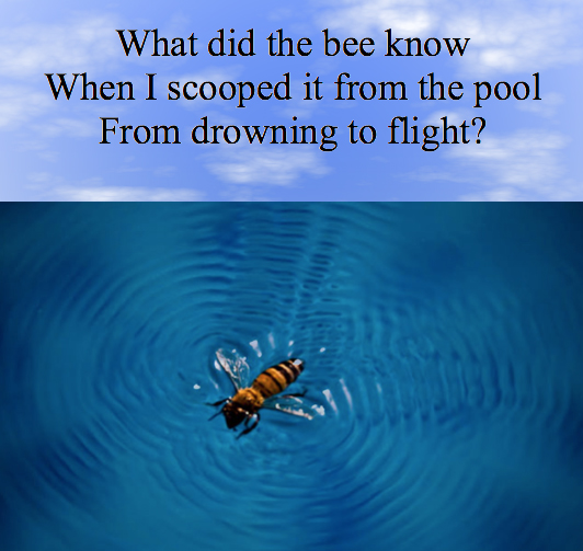 What did the bee know.jpg