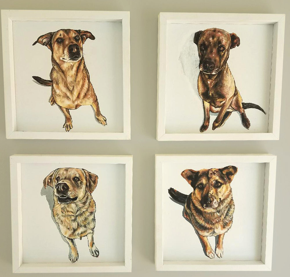 4dogportraits.jpg
