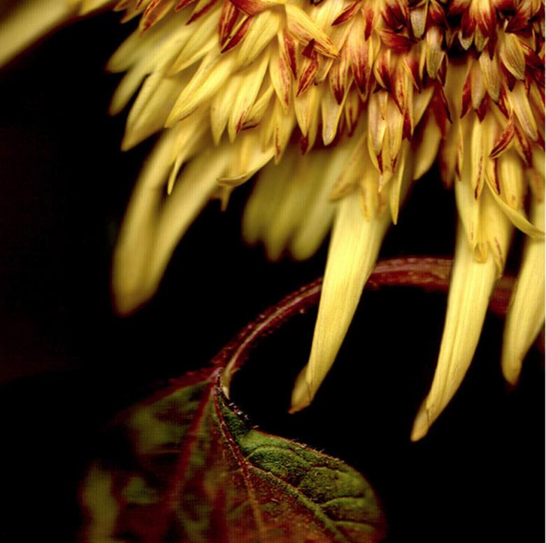 Flower 1 14.jpg