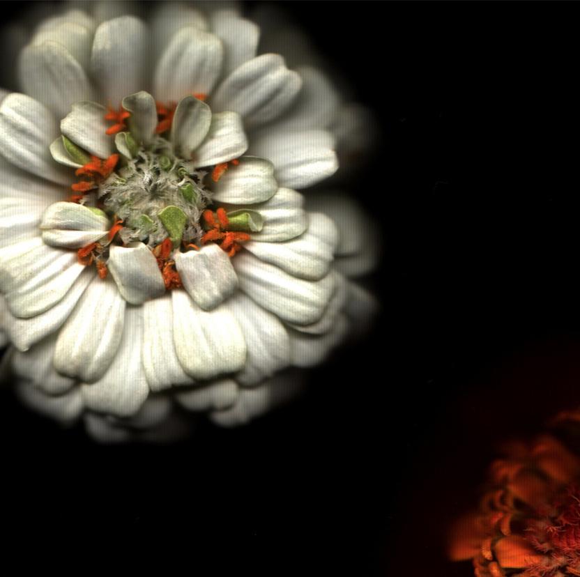 Flower 10 14.jpg