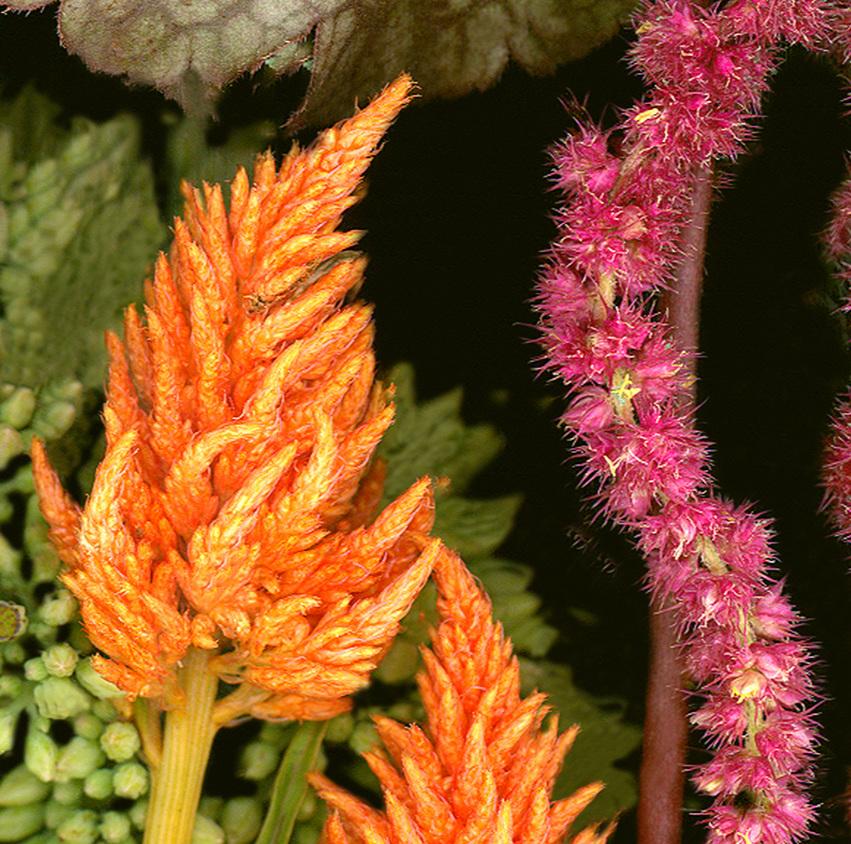 Flower 18 14.jpg