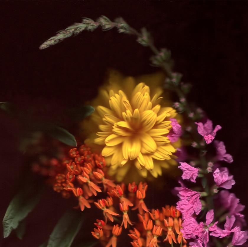 Flower 8 14.jpg