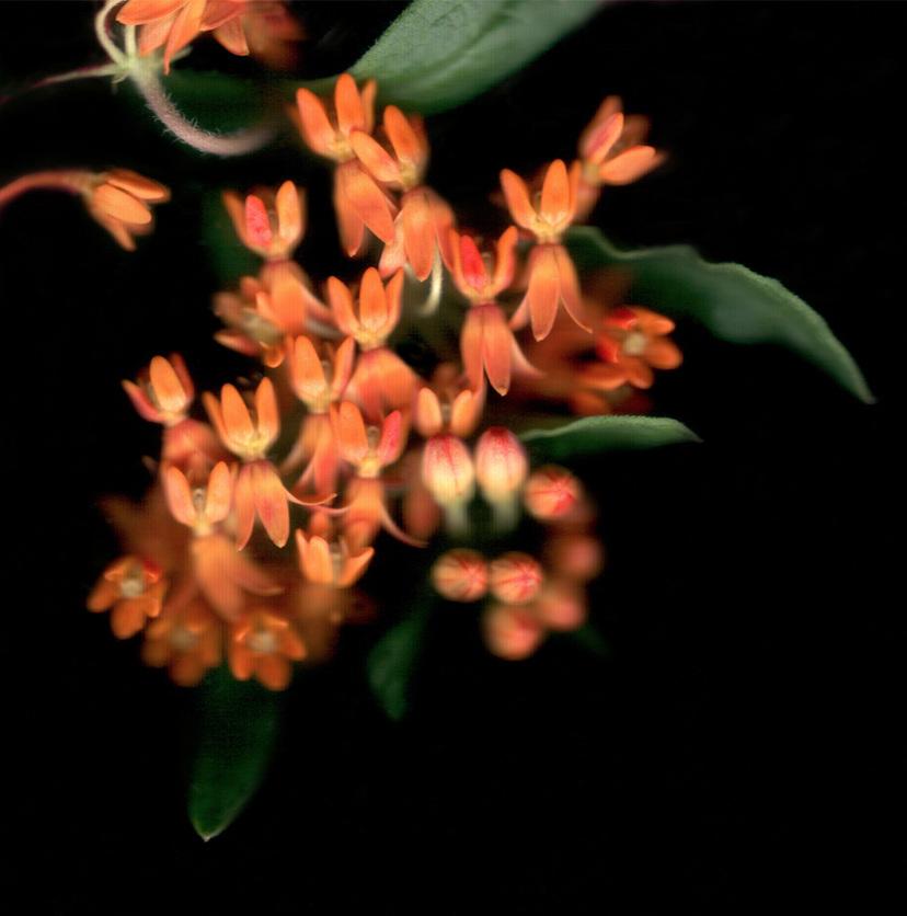 Flower 23 14.jpg