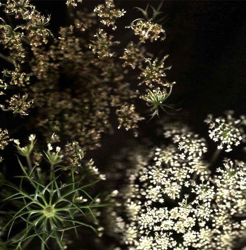 Flower 5 14.jpg