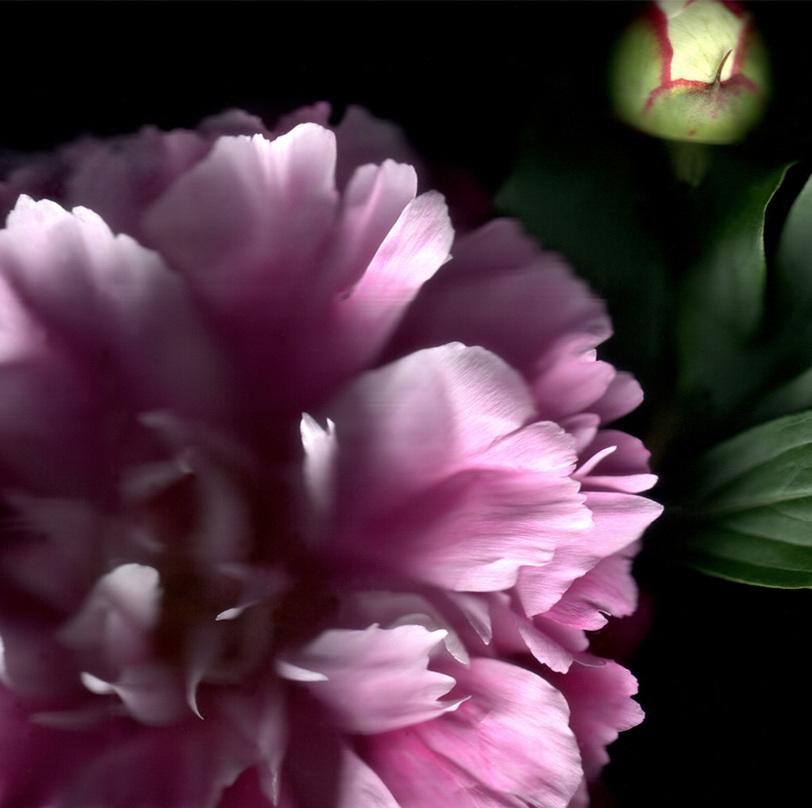 Flower 9 14.jpg