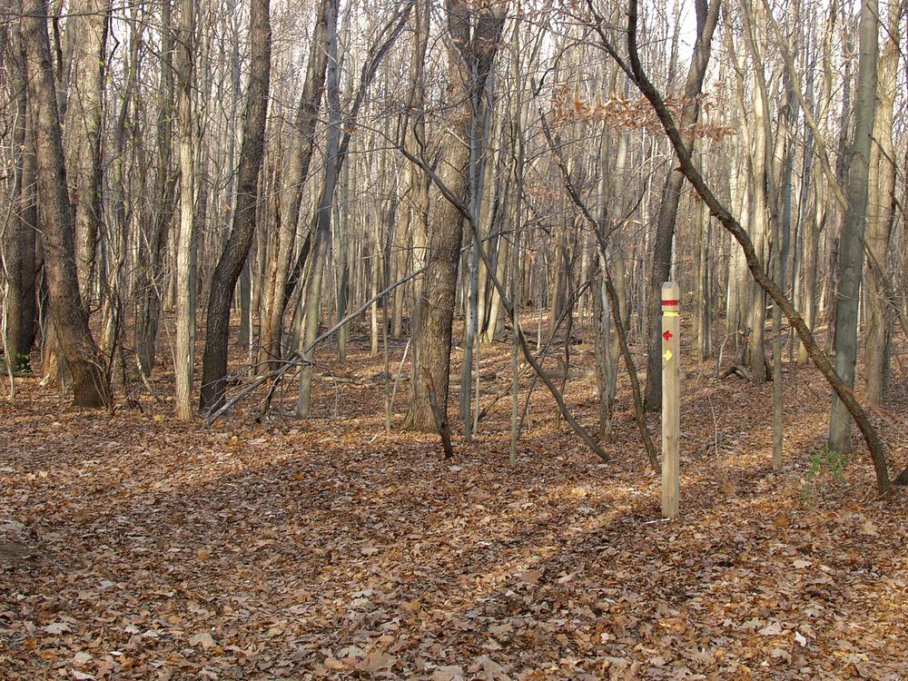 20021129_livoniawoods_r-y.jpg