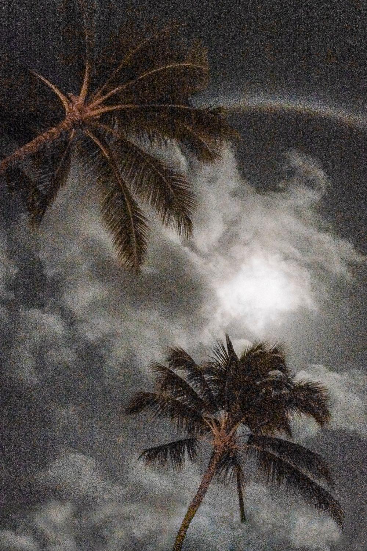 20150402_Kauai_056.jpg