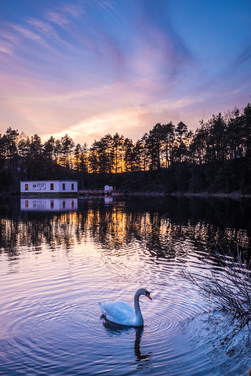 Lonely Glynmill Inn Swan