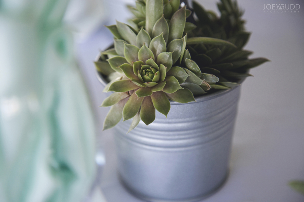 Calabogie Wedding at Barnet Park by Ottawa Wedding Photographer Joey Rudd Photography Succulant Wedding Favours