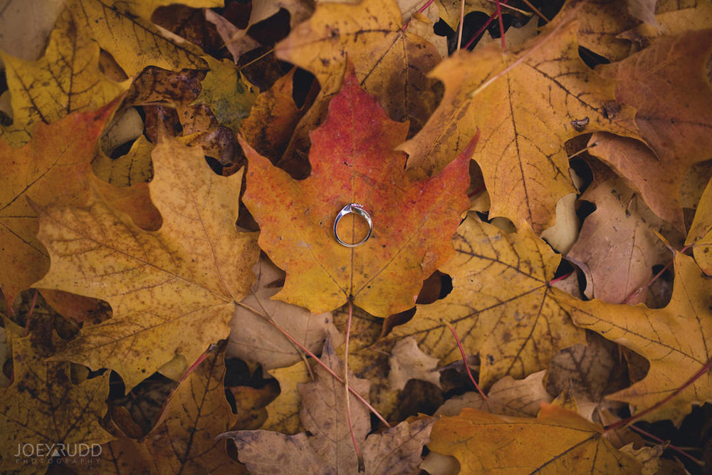 Ottawa Engagement Photography by Photographer Joey Rudd Photography Leaves