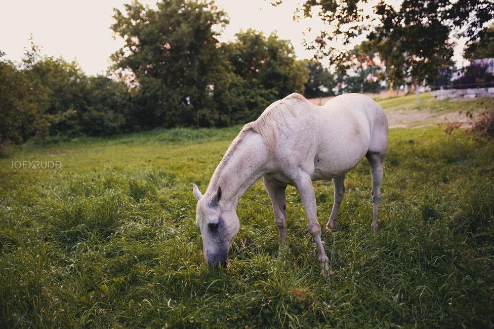 Engagement Session by Ottawa Wedding Photographer Joey Rudd Photography horses horse