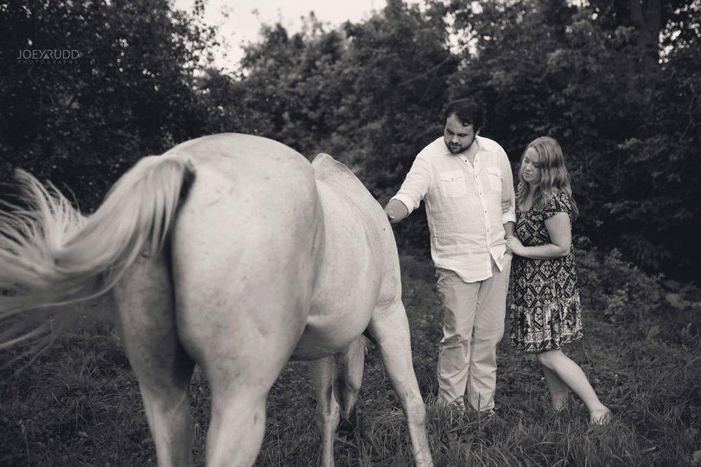 Engagement Session by Ottawa Wedding Photographer Joey Rudd Photography Horse