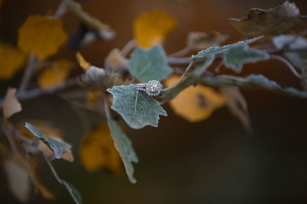 Mill of Kintail Engagement Fall Engagement Ottawa Wedding Photographer Joey Rudd Photography Ring Details