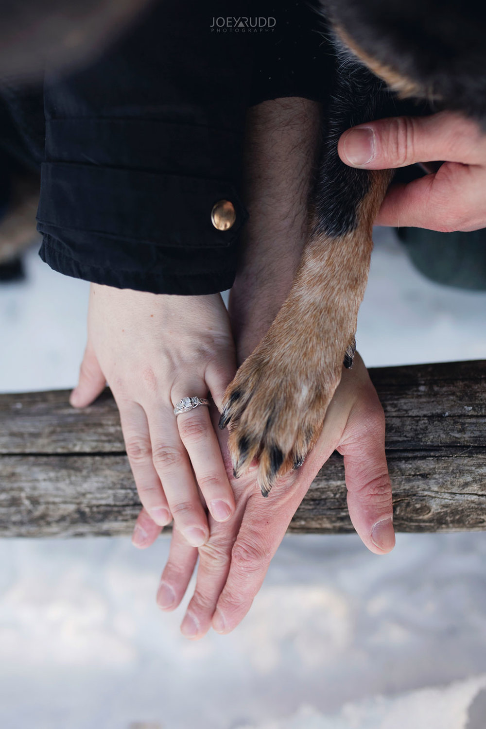 Mer Bleue Engagement, Ottawa Engagement, Engagement Photos, Engagement Photographer, Ottawa Wedding Photographer, Joey Rudd Photography, Ottawa Photographer, Winter Photos, Photo Location, Posing, Dog Paw