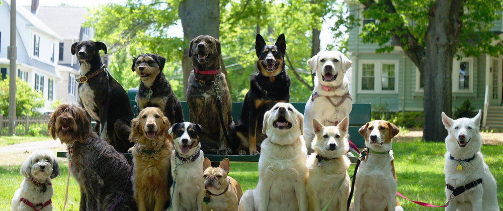 Welcome to the Woof Pack! - Woof! Woof!