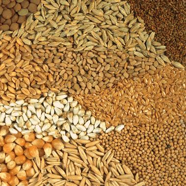 seedstorage.png
