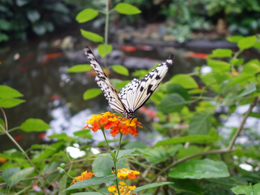 Victoria Butterfly Gardens — The Victoria Experience