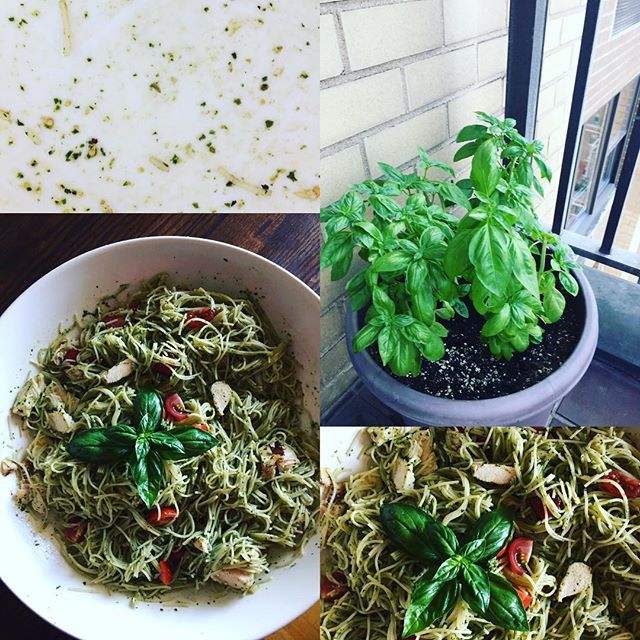 Made first pesto of the season. #balconygarden #homemadepesto