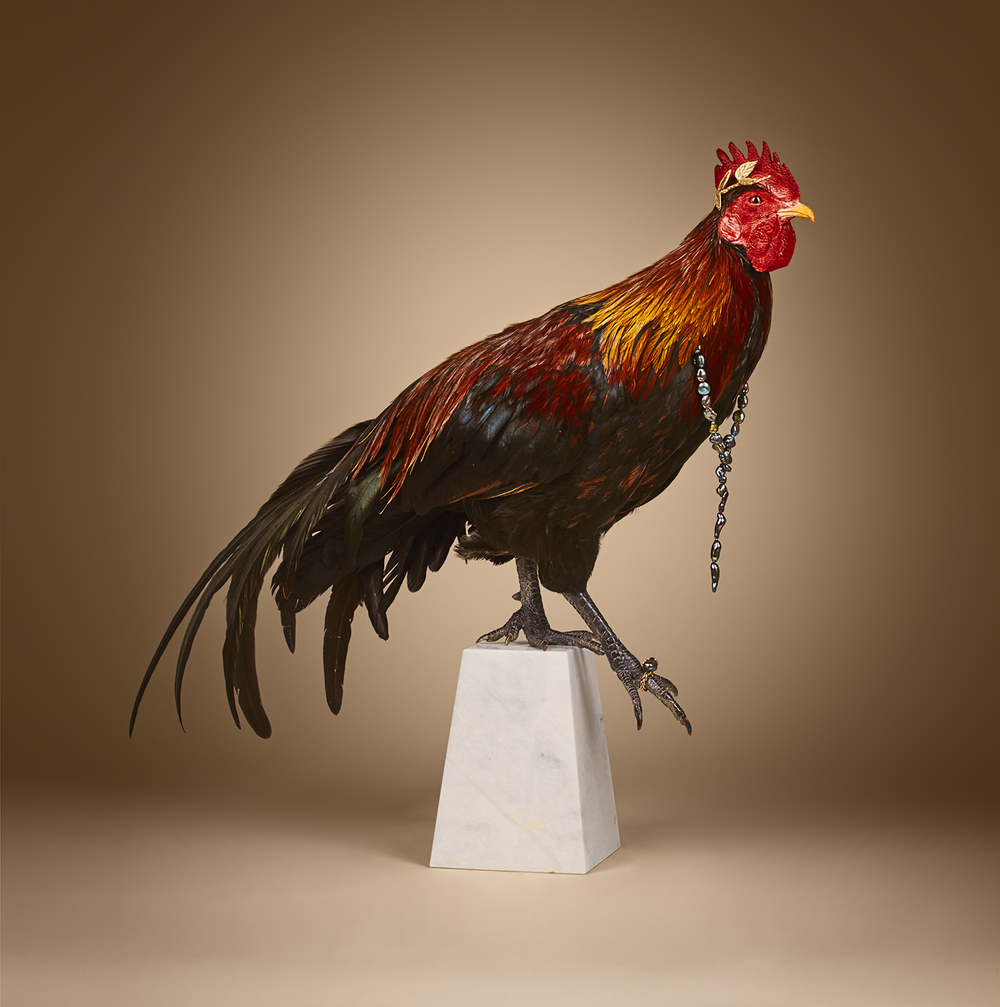 Rooster0247.png