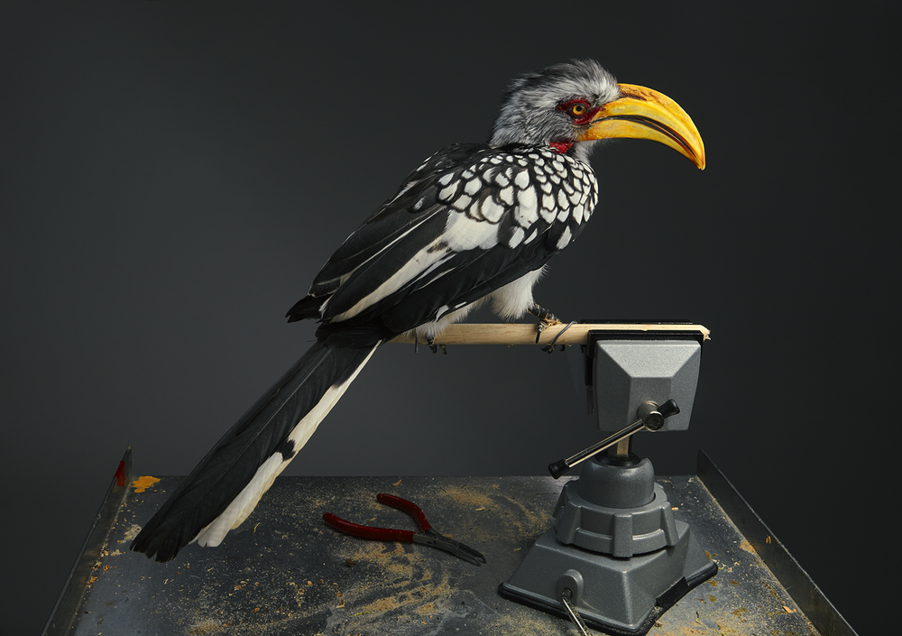 Prey Taxidermy0100.png