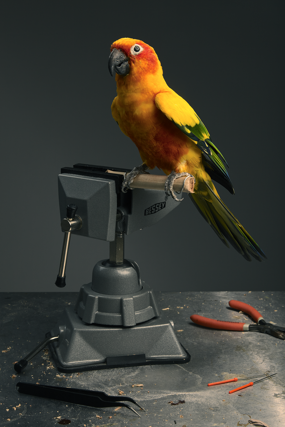 Prey Taxidermy0081.png