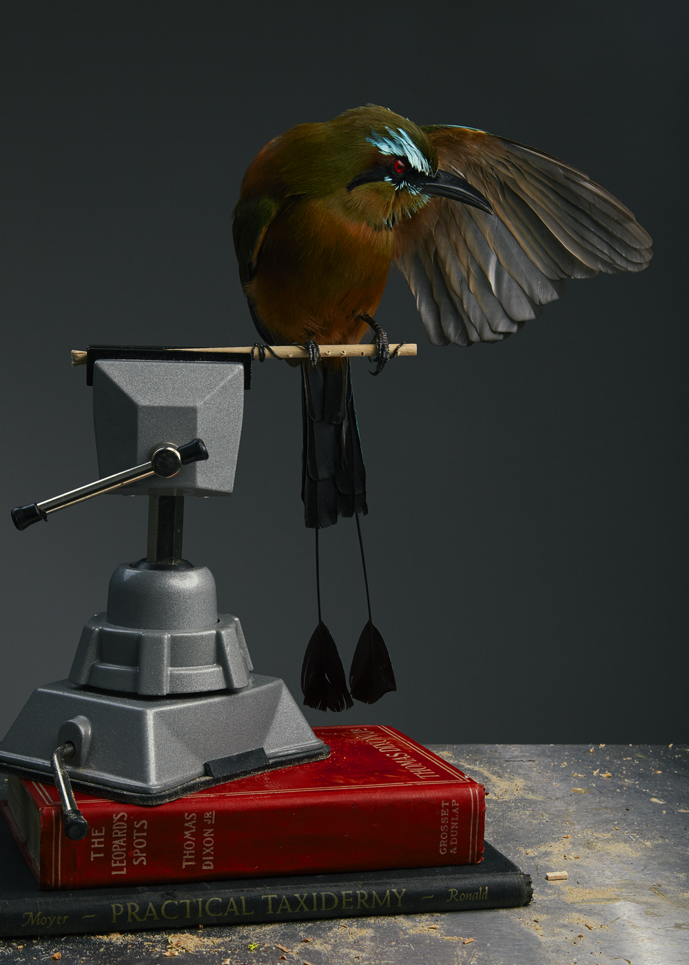 Prey Taxidermy0221.png