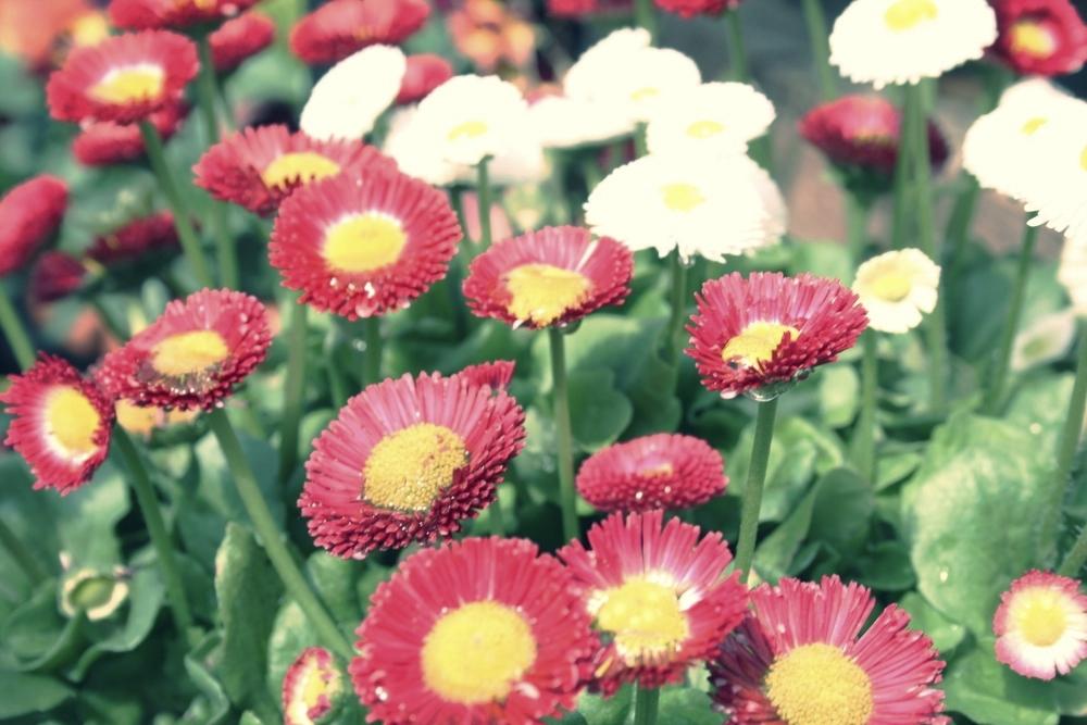 wildflower pink.jpg